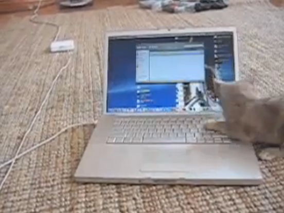 Kitten vs MacBook